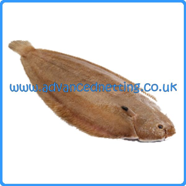 "Sole/Plaice Net 0.35 125mm (5"") 100 yds Long"